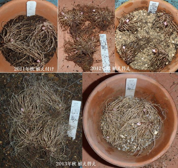 駄温鉢植え替え.3