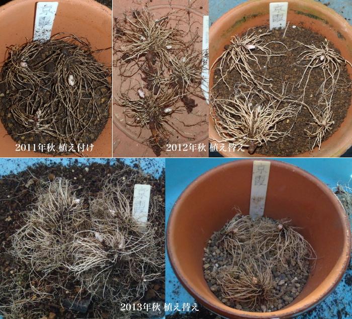 駄温鉢植え替え.4