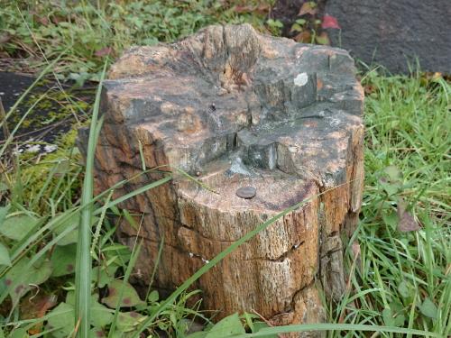 湯殿山大日坊大蔵出張所跡地.2 珪化木
