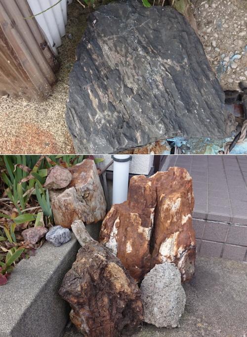 飛島勝浦地区の珪化木