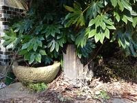 温海温泉の珪化木