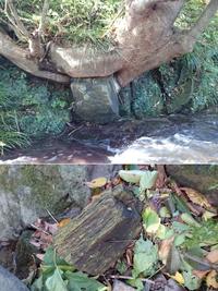 木の化石 珪化木
