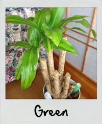 観葉植物、初心者