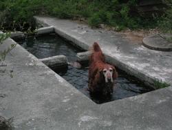 水飲み場?泳ぎ場?とに角嬉しそう