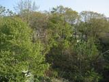 今日は天気も良く屋根から四方の風景紹介