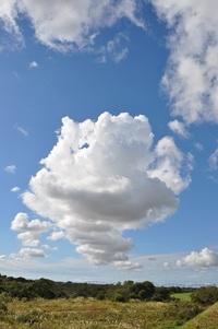 雲・くも・クモ・☁・・・