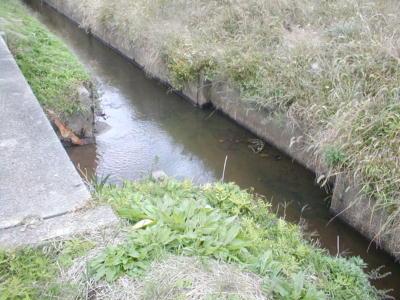 十の沢池の用水路