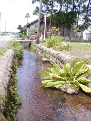 素敵な水路♪