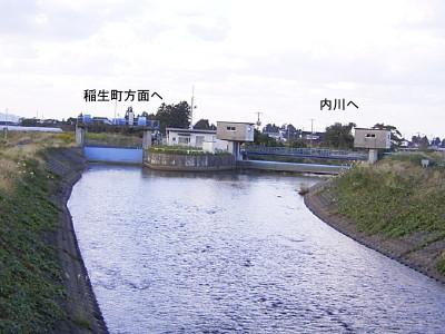 内川のイバラトミヨ