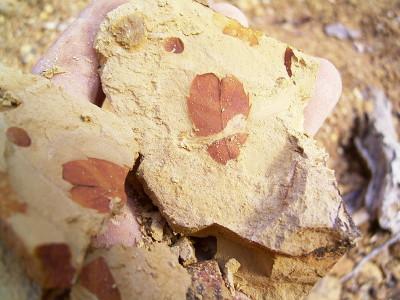 化石採り♪