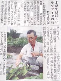 18日の山形新聞 サツマイモの花