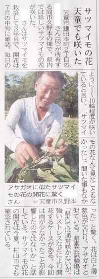 24日の山形新聞 サツマイモの花