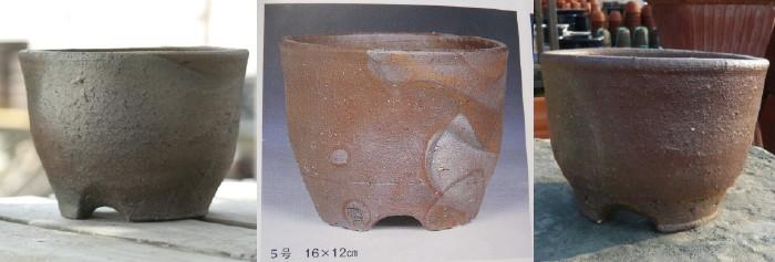 桜草の育て方.2