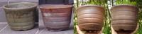 桜草鉢.5 京王百花園