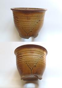 桜草鉢.6 市野ゲンエモン