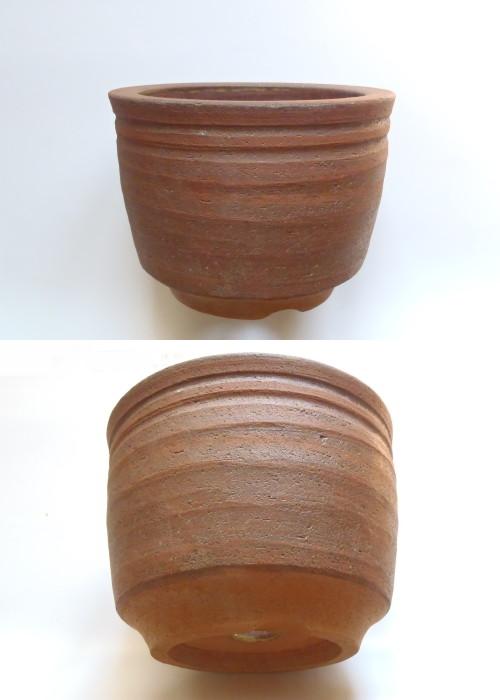 桜草鉢.1 岐阜の5つ子
