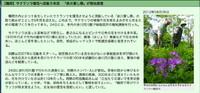 桜草の自生地復活?