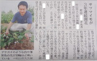 6日の山形新聞 サツマイモの花