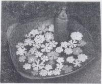 越智英一郎氏の桜草鉢.2