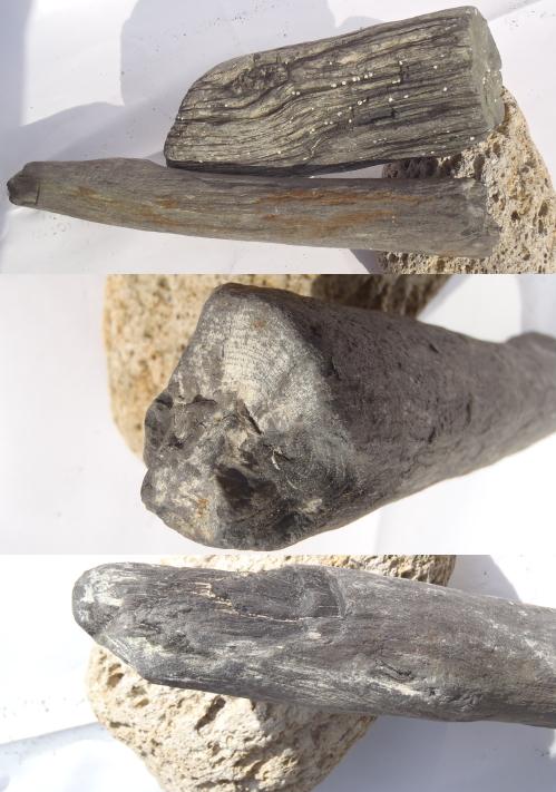 飛島 珪化木.2