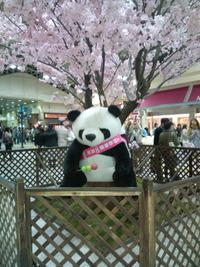 4月8日 東京桜満開!!