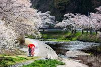 桜ロケフォト