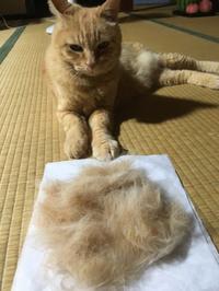 猫毛フェルト