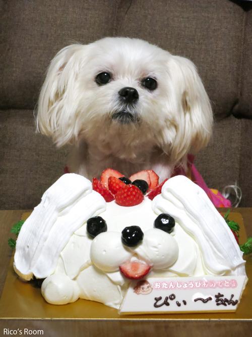 R ぴぃ〜ちゃん、11歳のお誕生日おめでとう♪『丸池様と牛渡川』『ぴぃ〜ちゃんケーキ』