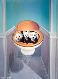 R 我が家のトイレ修理工事が、年内に無事完了しました!
