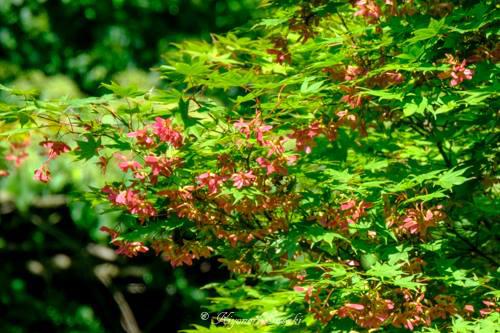 R 教えてください!この植物の名前はなんでしょうか?by 總光寺_国指定名勝庭園『蓬莱園』