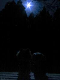 R シャガールみたいな青い夜♪ピンクムーンは、明晩です!の巻