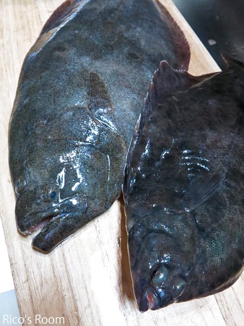 R 左ヒラメに右カレイ!比較してみると顔つきがこんなに違いました!