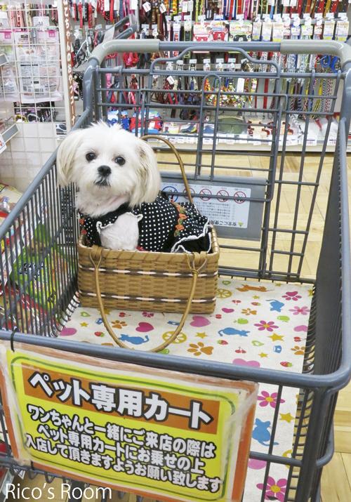 R 末娘とお買い物♪ぴぃ〜ちゃん、10歳のお誕生日おめでとう♡