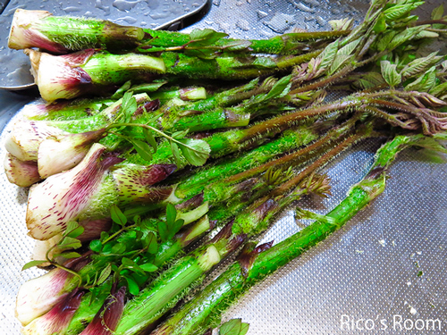 R ばんけ(ふきのとう)の茎は、んめの!初物の天然ウドと孟宗いただきました♪