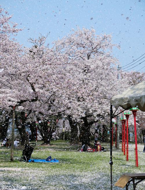 R『楯山公園桜まつり(庄内町)』にTOYOさんご出演&わんこ隊とふなっしーの巻♪