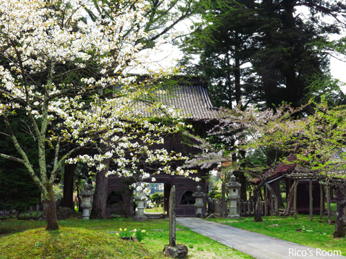 R 『匂い桜』満開!總光寺様で、『サクラ グリーンティーdeティータイム』の巻♪
