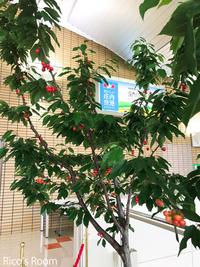 R 沖永良部島からのお客様『和泊町交流団 歓迎交流会』に荘内南洲会会員として参加させていただきました。