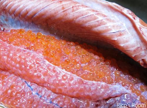 R 我が家のごっつお!THE他人丼?酒田沖で、秋鮭がバンバン獲れてます!