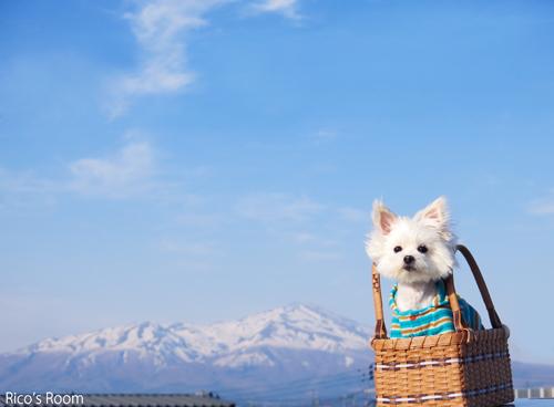 R 鳥海山とぽぉ〜♪ぽぉ〜ちゃんの『ドヤ顔』動画アップ♪