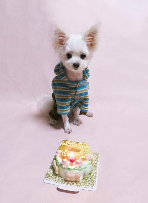 Rマイ エンジェルぽぉ〜ちゃん、10歳のお誕生日おめでとう♪