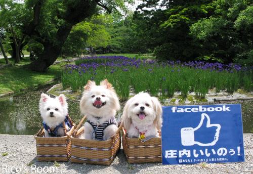 facebook庄内いいのぅ!週間が始まりました〜6/30迄