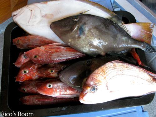 酒田沖、連日好漁!今が旬の平目の刺身がおすすめです!
