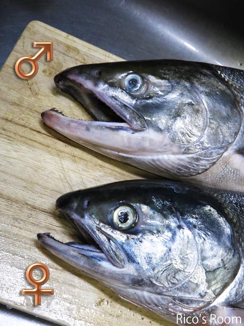 R『はらこめし』酒田沖の秋鮭&庄内産の新米で炊き上げました♪