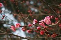 春だよ~お散歩で見つけた♪