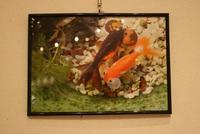 街キャンは「光陵高校写真部展」ですよ♪