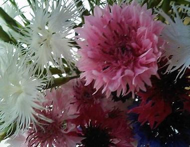 なつかし~い花 ✿♡
