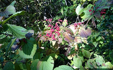 大山下池 Part2 秋の木の実