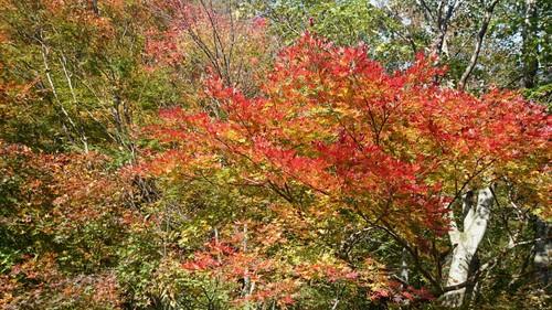 晩秋の赤芝峡