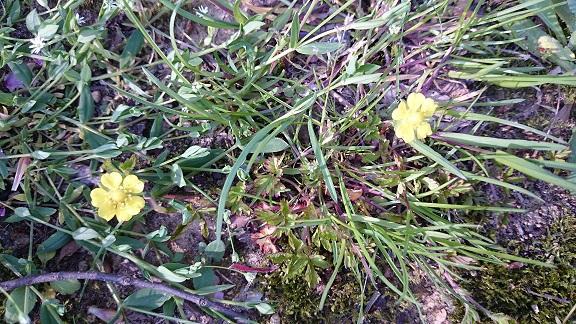 春の山野草part6