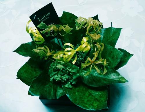 グロリオサというお花♡
